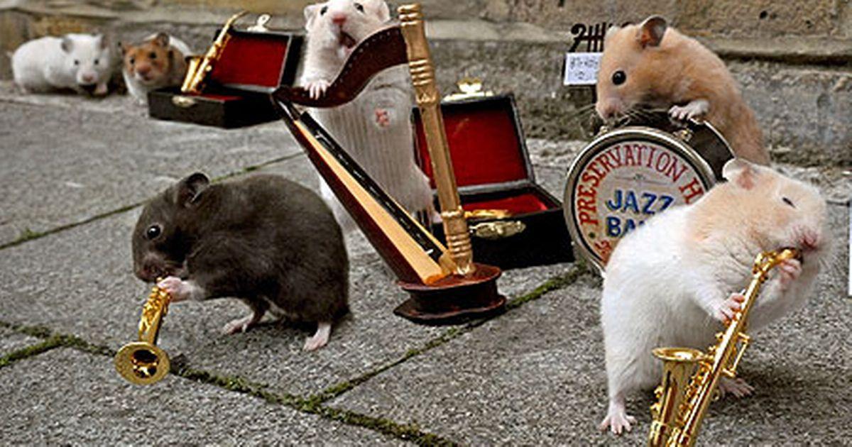 Mascotas que saben como rockear - Radio Cantilo