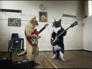 Mascotas que saben como rockear