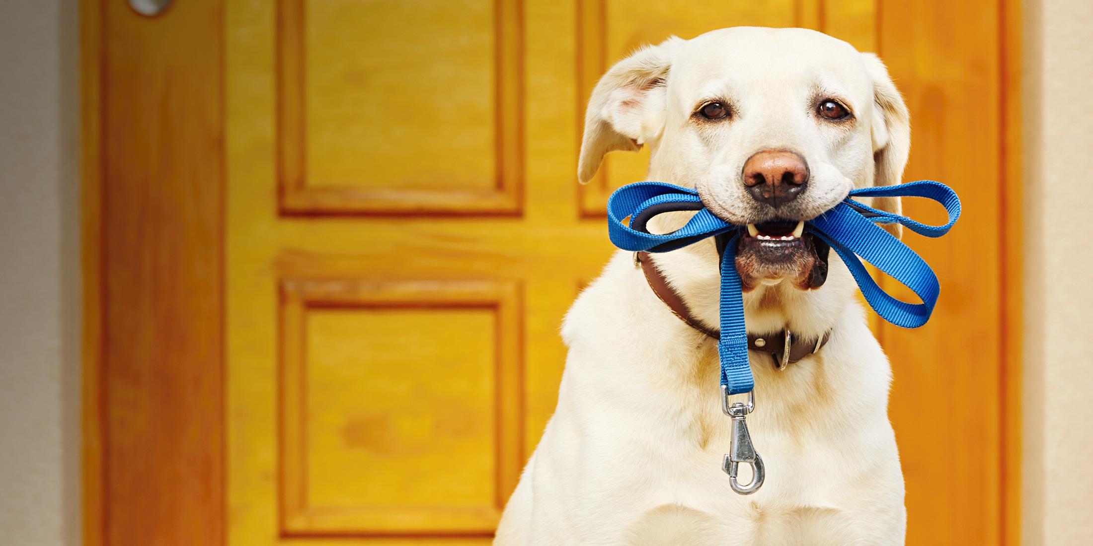 Los Tres Playlisteros: Música para pasear a tu perro - Radio Cantilo