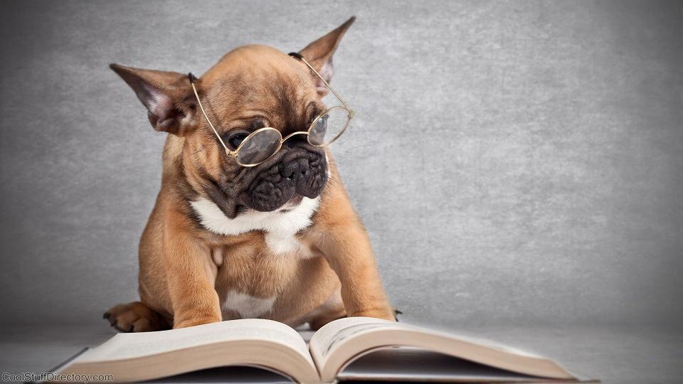 Los mejores libros con protagonistas caninos - Radio Cantilo