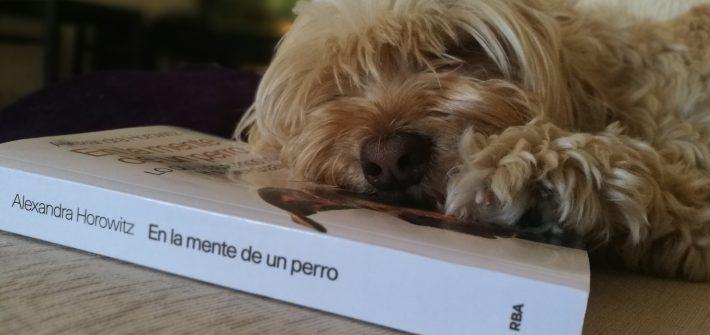 "Literatura canina: ""Novelas de perros"" - Radio Cantilo"