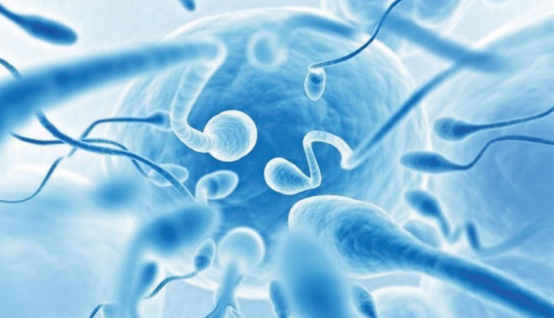 Almacén de Ciencia: Las últimas noticias e investigaciones sexuales (y más) - Radio Cantilo