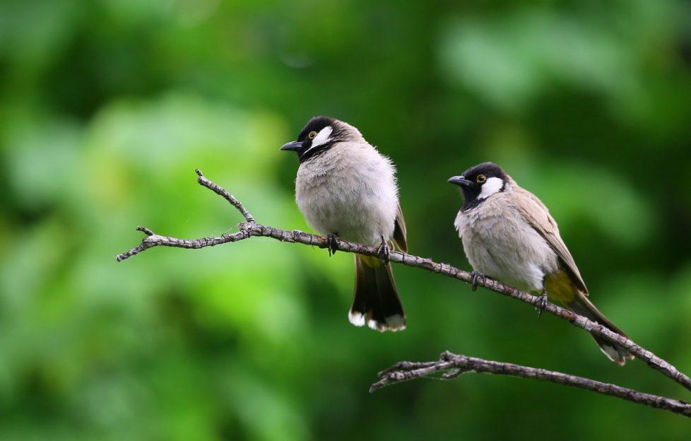 Una canción cantada por pájaros es furor en Gran Bretaña - Radio Cantilo