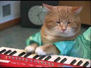 Los videos más divertidos de las mascotas estrellas de la música