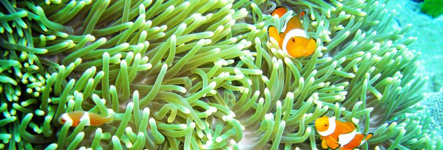 Almacén de Ciencia: ¿Sabías que algunos peces cantan a coro? - Radio Cantilo