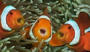 Almacén de Ciencia: ¿Sabías que algunos peces cantan a coro?