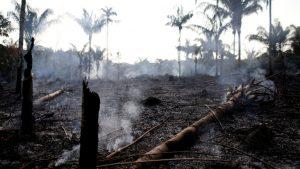 El Amazonas en llamas: la alarmante situación que azota a la selva brasileña