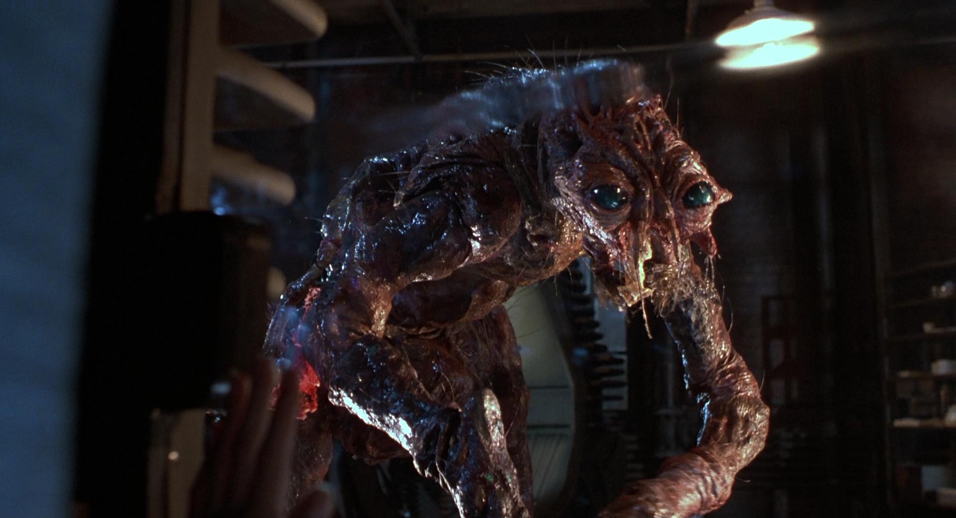 """""""La mosca"""", el horror corporal de David Cronenberg - Radio Cantilo"""