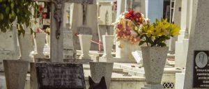 """#LosLibrosDeAle: """"Alguien camina sobre tu tumba"""" de Mariana Enriquez"""