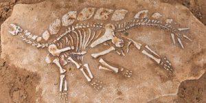 """""""Almacén de Ciencia"""": ¿De qué va la Paleontología?"""