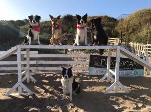 ¿Sabías que existen las playas para perros?