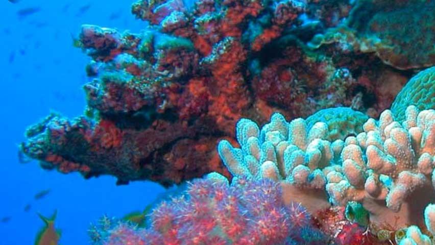 ¿Corales biónicos contra el calentamiento global? - Radio Cantilo