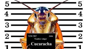 """""""Almacén de Ciencia"""": Todo lo que no sabías acerca de las cucarachas"""