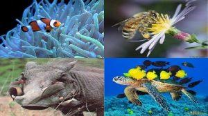 """""""Almacén de Ciencia"""": ¿Qué es la simbiosis?"""