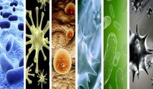 """""""Almacén de Ciencia"""": Epidemias y pandemias que azotaron al mundo"""