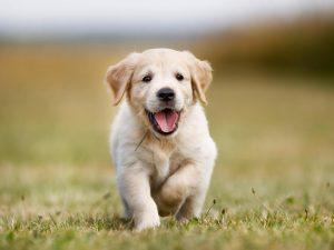 ¿Cómo llegaron los perros al mundo?
